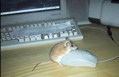 MouseMouse.jpg