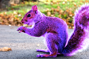 polls_purplesquirrel_0626_533310_answer_1_xlarge.png