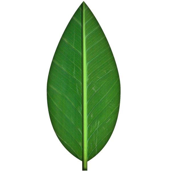 Green-Leaf-Texture-by-SpiralGraphic-on-deviantART.jpg