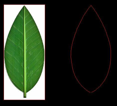 Leaf_1.JPG