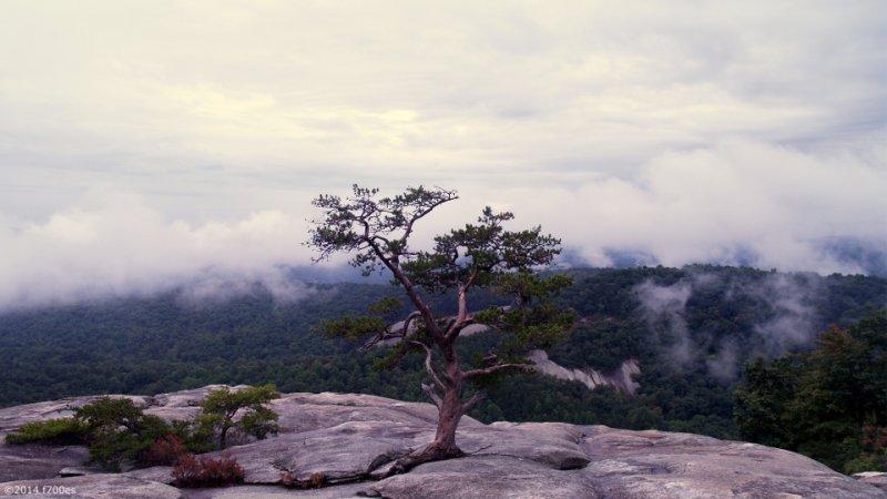 Stone Mtn summit tree small.jpg